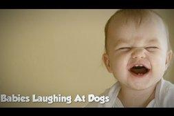 Wenn Hunde Babys zum Lachen bringen