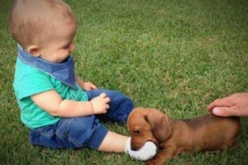 So gut schmeckt ein Babyfuß