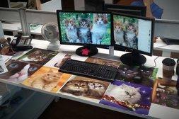Schreibtisch vom Katzenfan