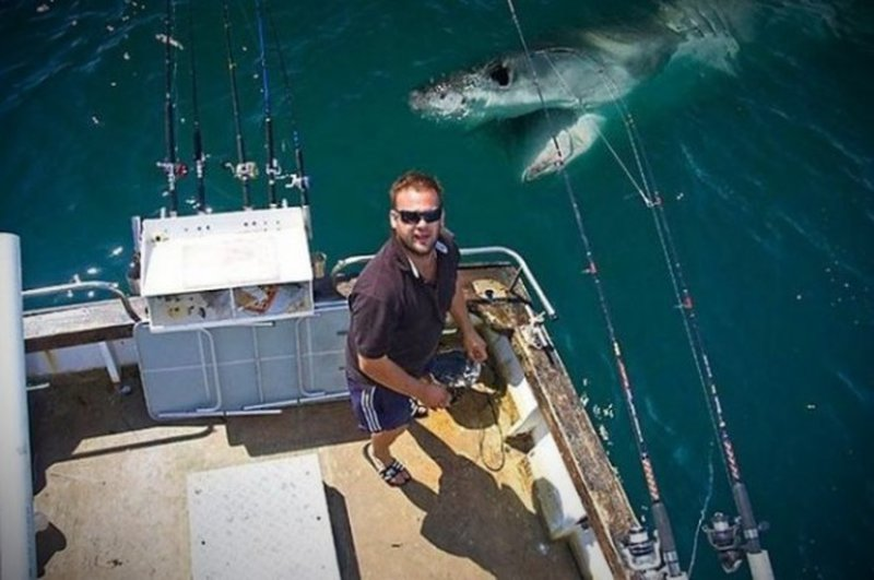 Drohender Hai-Angriff