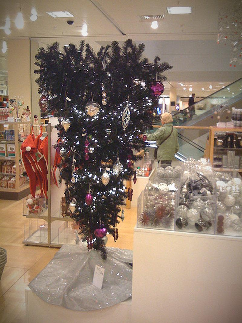 weihnachtsbaum selber schlagen bonn