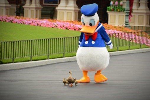 Donald Duck im Entenmarsch nach vorn