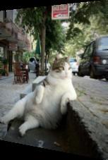 Katze sitzt Like a Boss