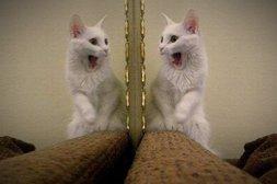 Katze erschrickt vor eigenem Spiegelbild