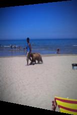 Mann spaziert mit Bär am Strand entlang