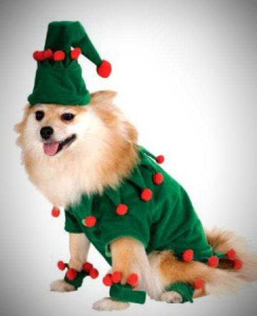 Auch Hunde können als Weihnachtself verkleidet werden.