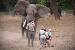Vollidiot droht Elefant mit Gewehr