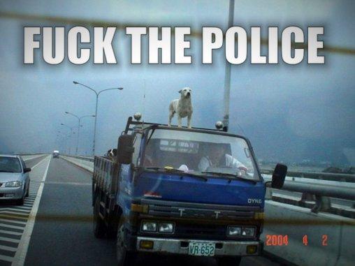 Hund auf dem Autodach