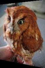 """Die """"MACH. DIE. MUSIK. AUS.""""-Hungover-Owl"""