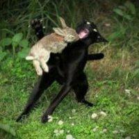 Hase beisst Katze