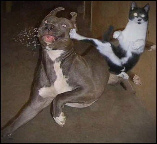 Katze tritt Hund