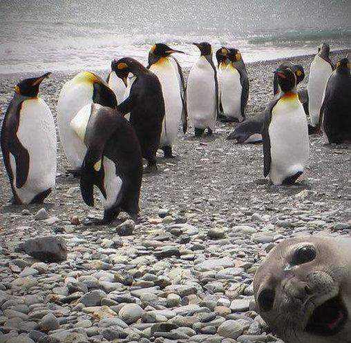 Photobombing: Seelöwe sprengt Pinguin-Bild