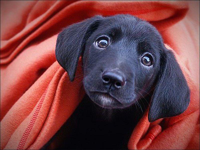 internat for hunde
