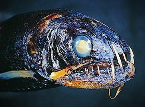 Glitzernder Fisch