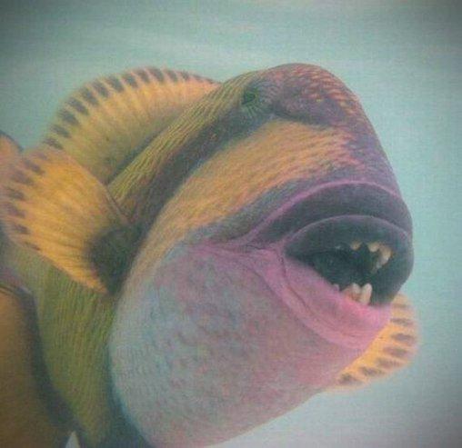 Schnappi, das Fischodil