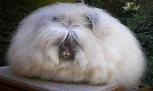 Dieses Kaninchen könnte als Sofakissen durchgehen