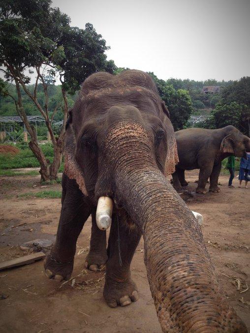 Elefant knipst Selfie