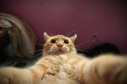 Katze mit Selfie