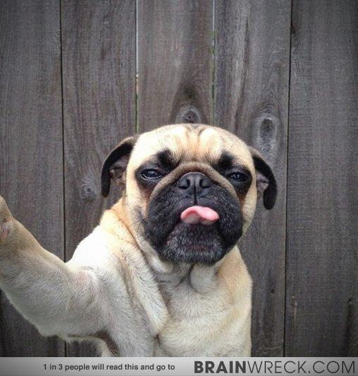 Mops macht Selfie