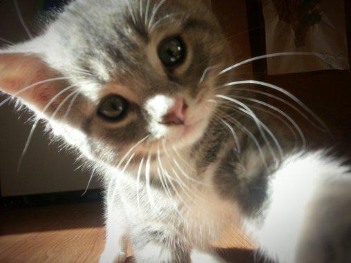 Süßes Kätzchen macht Foto