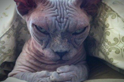 Faltige Katze - ein etwas anderer Stubentiger