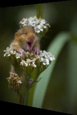 Der lachende kleine Hamster