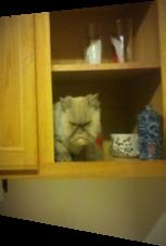 Diese Katze fühlt sich offenbar gestört