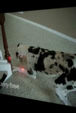 Laserpointer-Jagd: Hund und Baby spielen zusammen