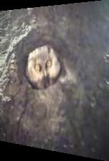 Verrückte Eule - Crazy Owl