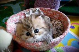 Diese fluffige Katze ist zum Quietschen niedlich