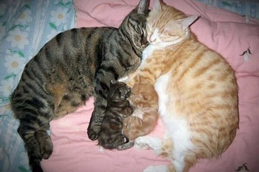 Katzenfamilie schlummert gemütlich aneinander gekuschelt