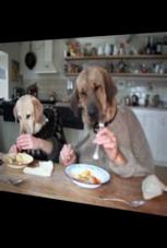 Hunde spielen Menschen beim edlen Dinner