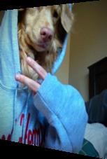 Hund mit tollem Modegeschmack