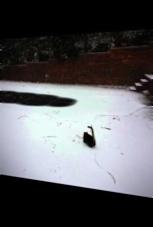 Katze freut sich über den ersten Schnee