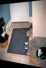 Hund tauscht Körbchen mit Katze