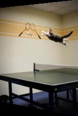 Fliegende Katze jagt Tischtennisball