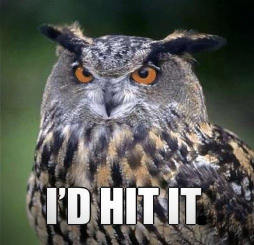 I'D Hit it Owl