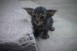 Diese Katze muss noch in die Ohren hineinwachsen