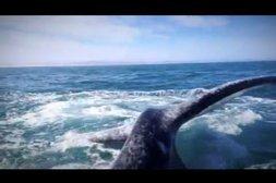 Vorsicht vor der Walflosse