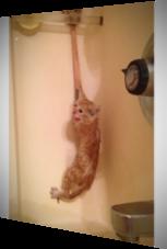 Diese Kätzchen kann dem Bad nichts Gutes abgewinnen