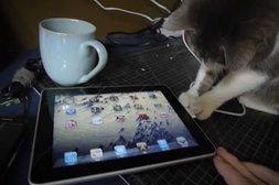 iPad 2 fasziniert Katze