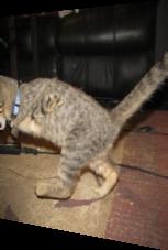 Katze wirkt wie Tyrannosaurus