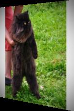 Eine Katze, die durchaus als Bodyguard durchgehen könnte