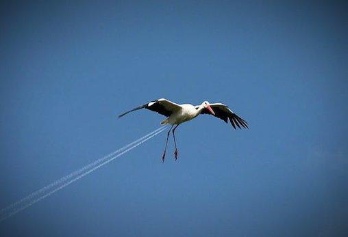 Dieser Storch hat Feuer unterm Hintern!