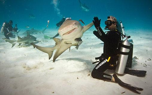 Gib mir Five, harmloser Hai!