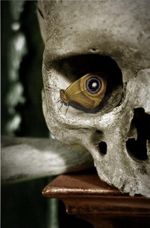 Wie praktisch, dass sich ausgerechnet ein Pfauenauge in der Augenhöhle des Totenkopfes niedergelassen hat.