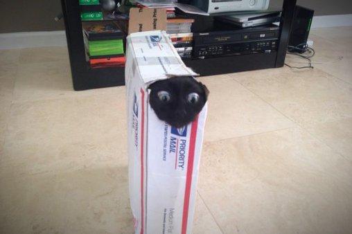 Schau mal, wer da ist – Katze im Karton