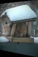 Selbst im Schlaf liegt diese Katze immer auf der Lauer