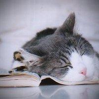 Diese Katze ist so müde, dass sie über ihren Notizen eingeschlafen ist.