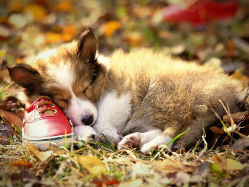 Dieses Bild von einem schlafenden Hund ist nicht nur lustig, sondern auch sehr süß!